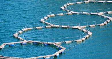 Acquacoltura, oltre 4,3 milioni di euro per sostenibilità efficienza e innovazione